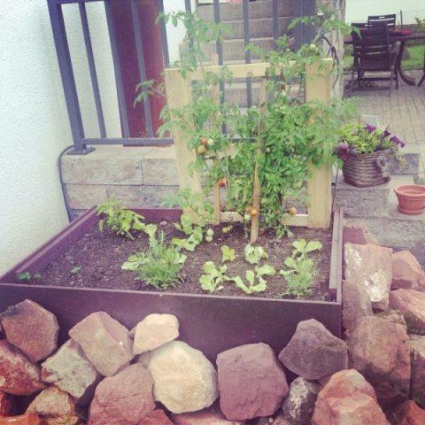 Tomatenhaus2