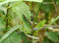 caterpillar-342155__180
